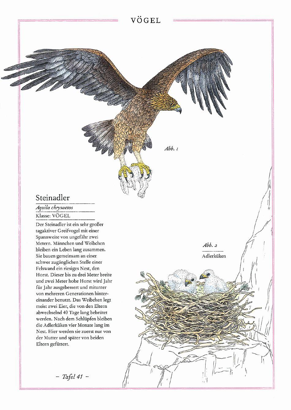 Steinbock, Adler, Edelweiß -Die Welt der Berge